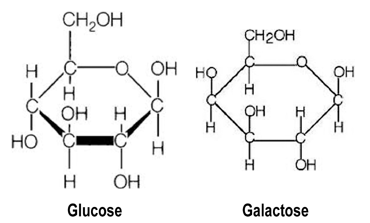 Gatorade, Galactose and Hydration: Research based ...